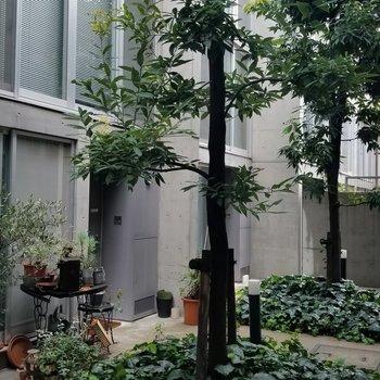 共用部の植栽もしっかりデザインされているんです。