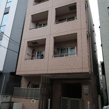 Prunus南大井