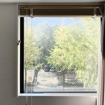 スクエアの窓。イチョウ並木の景色はまるで絵画です。(※写真は清掃前のものです)