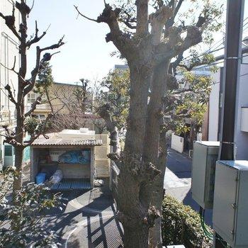 眺望はこちら。バルコニーは無いです※写真は同間取りの別部屋です。