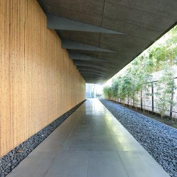 根津美術館の竹林