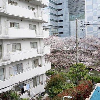 桜並木がチラリ。※写真は4階の別部屋