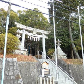 裏手には神社。いい場所なんです