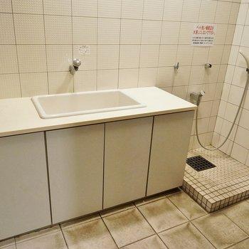 共用部分にペット専用洗い場ありました。