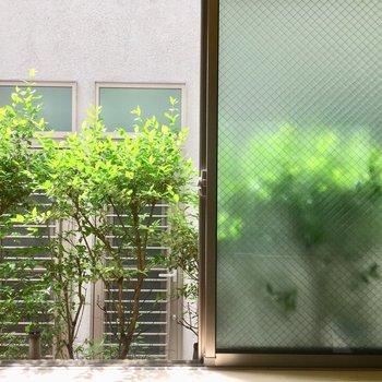 それにしても、このキラキラのグリーンが素敵だと思います。なんなら剪定もして、毎日愛でよう。
