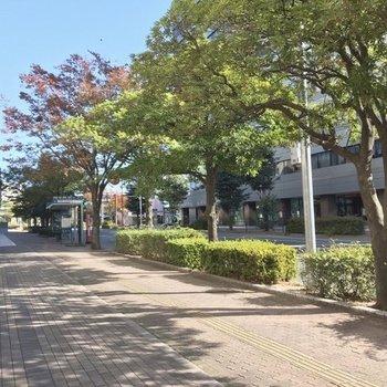 駅からさらにまっすぐ行くと千代東公園。大きな東公園も歩いて8分ほどです!