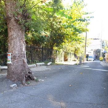 【周辺環境】アパート前の坂道。一見山の中のようにも見えますが、すぐそこは大通りです。