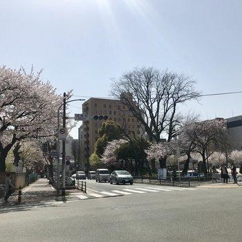春は桜を毎日楽しめそうです!