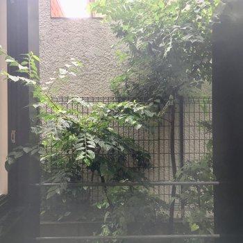 眺望は・・・中庭?マンションの敷地内なので人目が気になりません