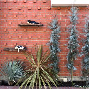 ネコと住む部屋