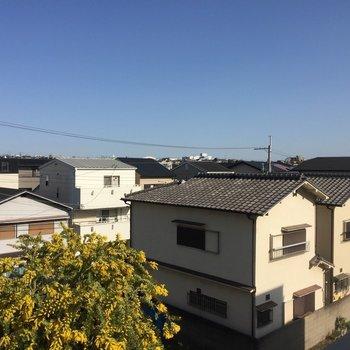 【眺望】窓からはお隣さんのミモザが!◎