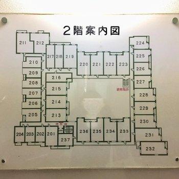 ひろい!204号室は左下、エレベータから近いです。