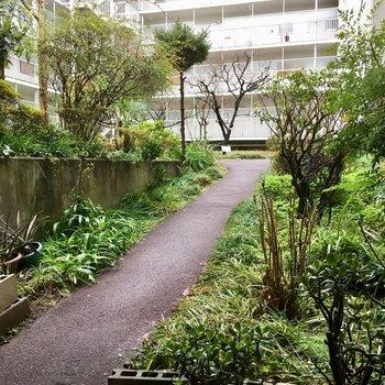 エントランスの奥は緑あふれる中庭になっています!