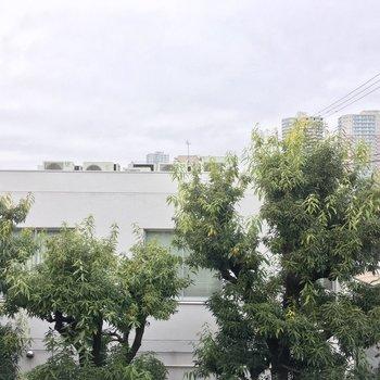 眺望は、緑がいい感じ!