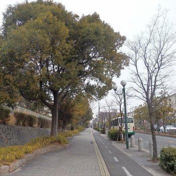 駅からはゆる~い上り坂。街路樹たっぷりで気持ちいい~!