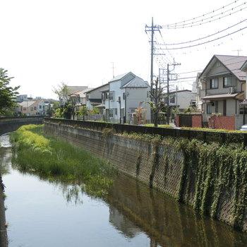 近くに流れていた仙川