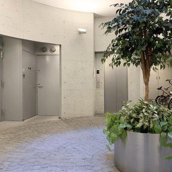 共用廊下には緑もあります。