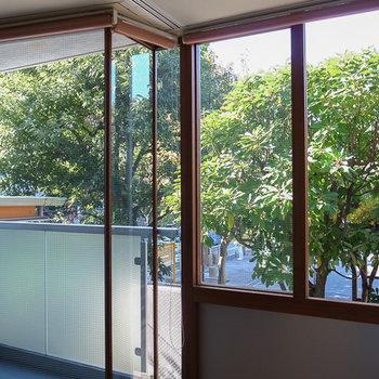 この窓、サッシも木製なんですよ。こだわってます。※写真は別部屋です