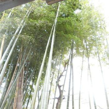 もう一つの竹取物語