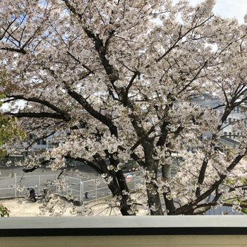 窓からは満開の桜が!!!