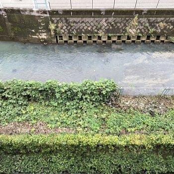 下を向くと川が流れています。自然の音を楽しめます