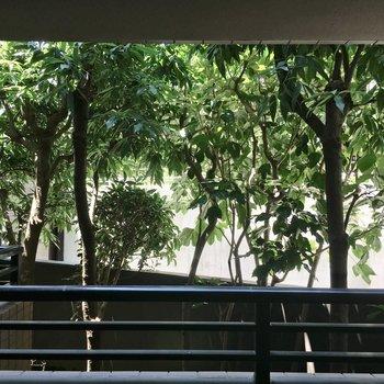 眺望は・・・緑のカーテン!※クリーニング前の写真です