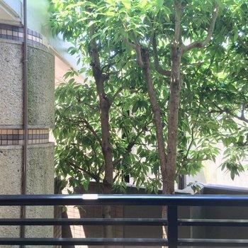 コチラも眺望は緑のカーテンですね〜※クリーニング前の写真です