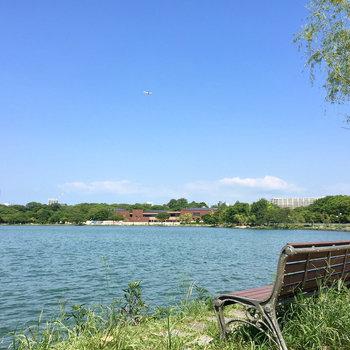 眺めの良いベンチがお気に入り。散歩の途中に休憩もいいね。