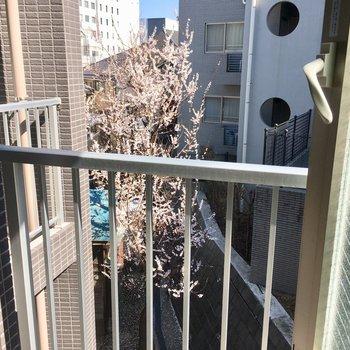 南東向きの小窓からも、早咲きの桜がきれい〜