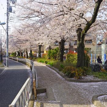道中の桜が気持ちいい♪※写真は前回募集時のものです