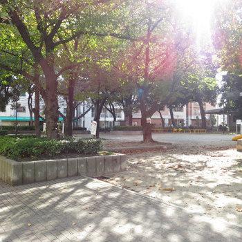 目の前公園。癒される。。