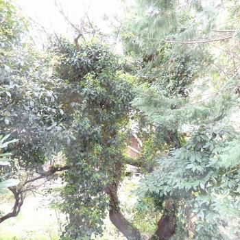 目の前は木々ですね。