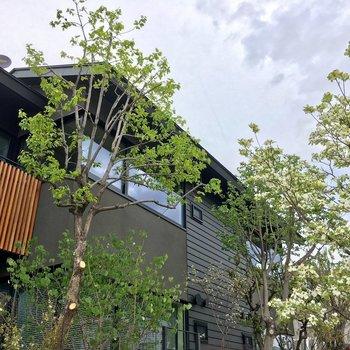 柔らかい印象の素敵な木々が植わっていした。