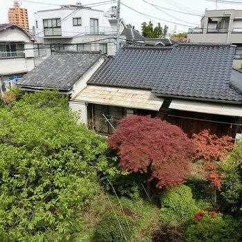 洋室の窓から見えた日本家屋とお庭