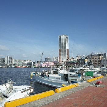 博多湾お散歩できます