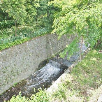 近くにはのどかな川も流れています