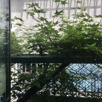 寝室の小窓から。こちらは空気の入れ替えとして!