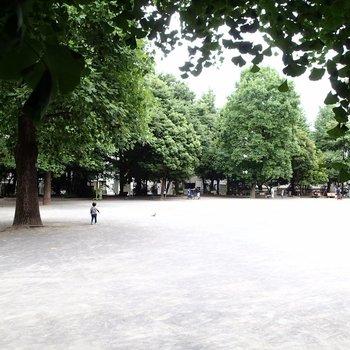 近くの公園!