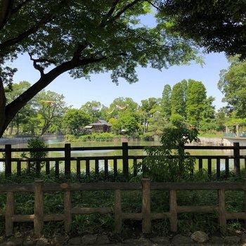 近くの碑文谷公園が素敵なんです。