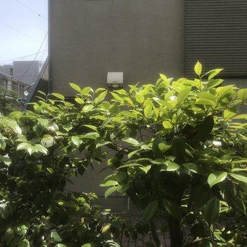 リビング窓からの景色です。