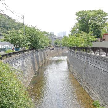 お部屋のすぐ目の前は神田川が流れます。
