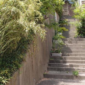 近くにあった階段。好きだなこの景色