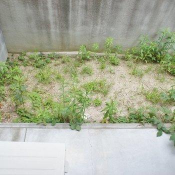 テラスは草抜きが必要