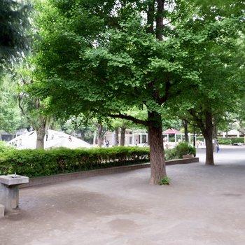 目の前の白銀公園。子供たちで賑わってます。