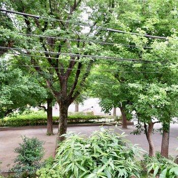 眺望は公園の緑が!心地いい〜◎