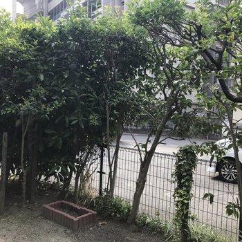 植樹で駐車場からの視線もさりげなくカットしてくれますね。