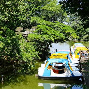 お部屋の近くには善福寺公園があります。