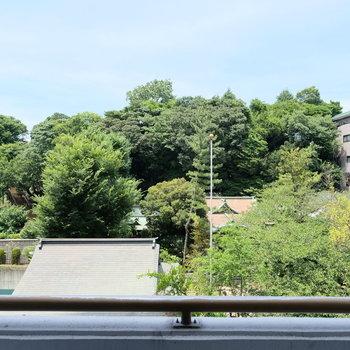 都会とは思えないグリーンビュー。これは御田八幡宮のおかげ。