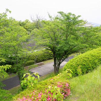ここは桜並木。春が楽しみ。