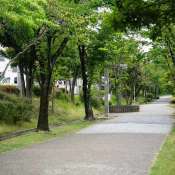 バス停からは緑道で。車通りがなくて安心できる道です